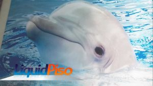 curso porcelanato liquido adesivo golfinho 3D em São Paulo SP
