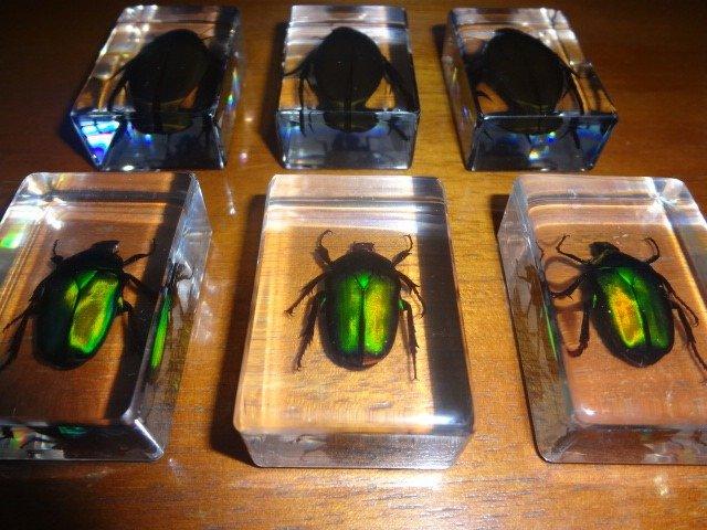 besouro-escaravelho-na-resina-incrustaco-de-insetos-D_NQ_NP_16975-MLB20129158429_072014-F